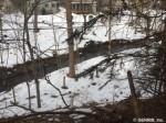 111 Brookwood-backyard