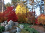 551 Morgan Road The Japanese garden in Autumn